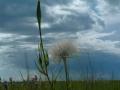 green_milkweed_02