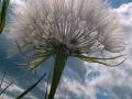 green_milkweed_06