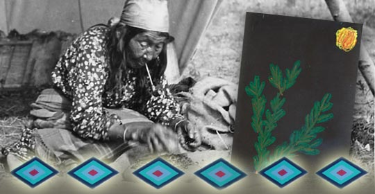 Blackfoot woman sorting out berries. Shelby's drawing of Kinnikinnick in pastels. (Photo courtesy of Glenbow Museum Archives NA-667-486)