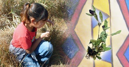Sommer in the field picking plants. (Glenbow Museum. (2005). Nitsitapiisinni Exhibit. Calgary, Alberta: Blackfoot Gallery Committee)