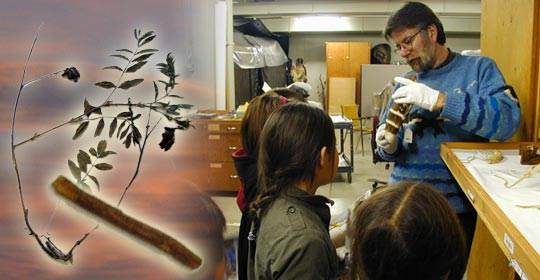 Gerry Conaty, Chief Curator at the Glenbow Museum shows the artifacts to the children. (Glenbow Museum. (2005). Nitsitapiisinni Exhibit. Calgary, Alberta: Blackfoot Gallery Committee)