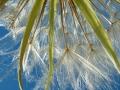 green_milkweed_07