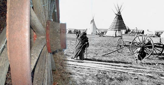 Lodgepole Pine are often used for tipis. (Photo courtesy of Glenbow Museum Archives NA-667-106)