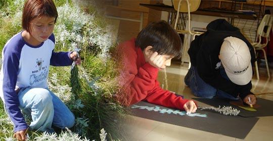 Kendra picking Louisiana Sagewort in the dry prairie. Noah and Shelby drawing Louisiana Sagewort.