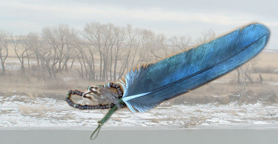 This is a raven feather. Ravens like to eat Roughfruit Fairybell.