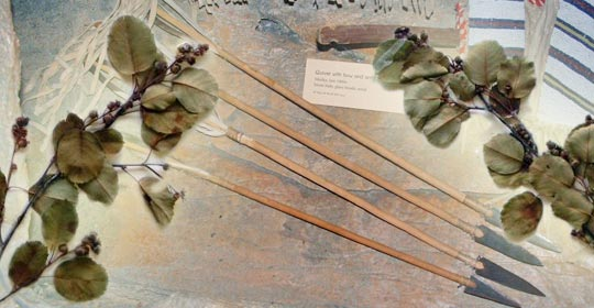 Dried Saskatoon leaves with arrows from the Glenbow Museum Exhibit. (Glenbow Museum. (2005). Nitsitapiisinni Exhibit. Calgary, Alberta: Blackfoot Gallery Committee)