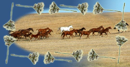 Wild Onion was used to doctor horses.