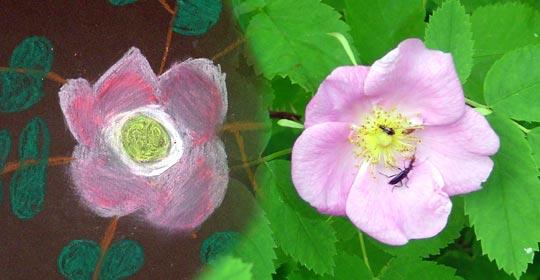 Shelby's interpretation of the Wild Rose flower in pastel.
